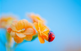 Preview wallpaper Ladybug, yellow flowers, hazy background