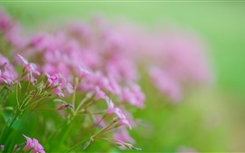 Little pink flowers, hazy background, spring