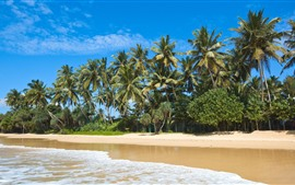 Maldivas, playa, costa, mar, palmeras, tropical
