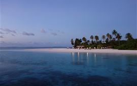 Maldivas, mar, playa, palmeras, anochecer