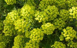 Vorschau des Hintergrundbilder Viele grüne Blumen