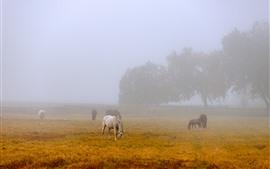 Manhã, nevoeiro, alguns cavalos, grama