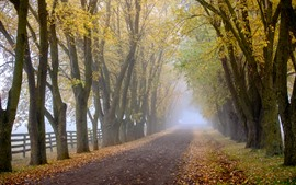 Morning, fog, trees, road, countryside, autumn
