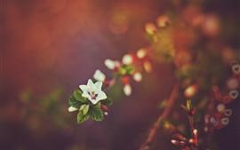 Una pequeña flor, fondo brumoso