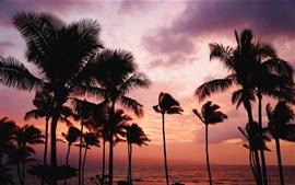 Palmeras, puesta de sol, mar, cielo rojo
