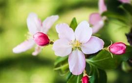 Pink flowers close-up, petals, hazy, spring