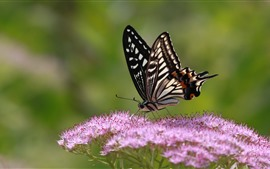 Preview wallpaper Pink little flowers, butterfly, wings, insect