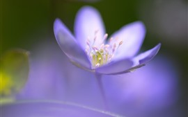 Preview wallpaper Purple flower close-up, pistil, hazy