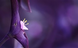 Preview wallpaper Purple flower close-up, pistil, purple background