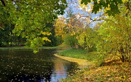 River, maple trees, leaves, autumn