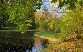 Rivière, érables, feuilles, automne