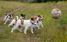 Preview wallpaper Some dogs play football