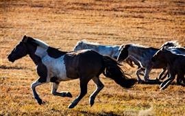Alguns cavalos correndo, pastagem