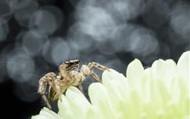 壁紙のプレビュー クモ、花びら