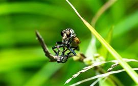 壁紙のプレビュー クモ、昆虫、草