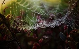Teia de aranha, gotas de água, folhas