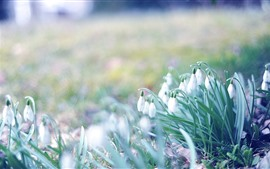 Preview wallpaper Spring, snowdrops, hazy