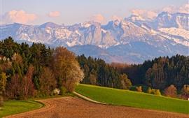 미리보기 배경 화면 스위스, 산, 나무, 들판