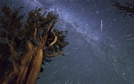 Tree, night, starry, sky