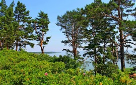 Trees, bushes, sea