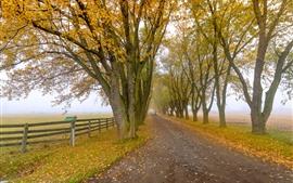 Árboles, niebla, cerca, camino, campo, otoño