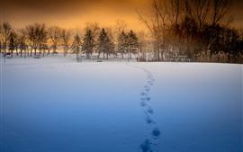 Inverno, pôr do sol, neve, árvores, belas paisagens