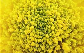 Macro fotografia flor amarela, nebuloso
