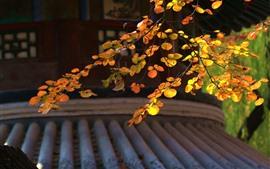 미리보기 배경 화면 단풍, 나뭇 가지가, 공원