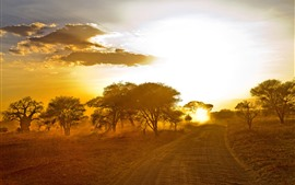 Africa, trees, road, sunset