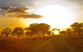 África, árvores, estrada, pôr do sol