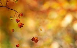 Outono, folhas de bordo vermelho, fundo laranja