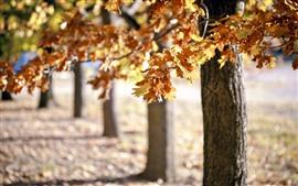 미리보기 배경 화면 가을, 나무, 노란 잎, 헷갈리는