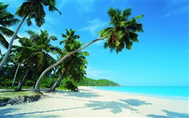 Preview wallpaper Beautiful tropical scenery, palm trees, beach, sea, sunshine