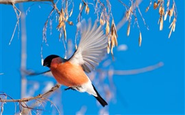 Preview wallpaper Bird, bullfinch flight, wings, plants