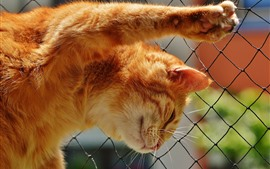 Preview wallpaper Cat climb wire fence