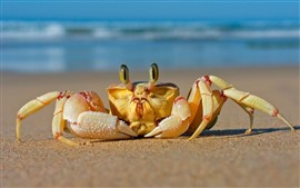 Preview wallpaper Crab front view, beach, sea