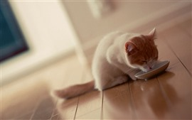 Preview wallpaper Cute kitten drink water, plate, room