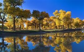 壁紙のプレビュー 黄金の秋、木、湖、水の反射