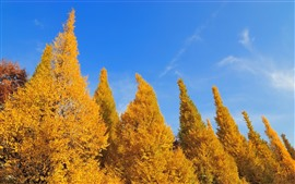 Preview wallpaper Golden trees, blue sky, autumn
