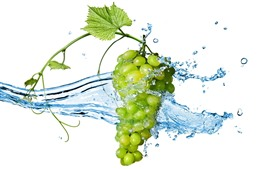 Зеленый виноград, брызги воды, белый фон