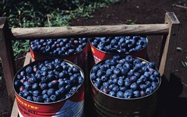 Preview wallpaper Harvest, many blueberries, bucket