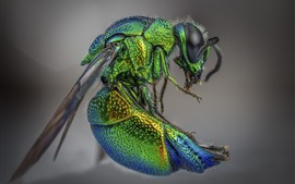 Preview wallpaper Insect, house fly, green, macro photography