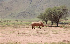 Одинокий носорог, гуляя, Африка