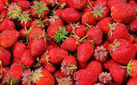 Preview wallpaper Many delicious strawberries, fruit
