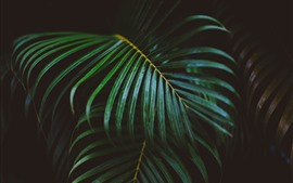Palm leaves, darkness