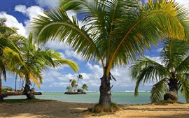 Preview wallpaper Palm trees, beach, coast, island, summer