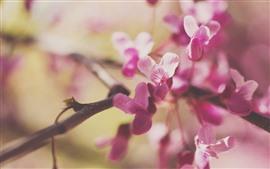 Pink flowers, twigs, hazy