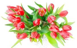 Tulipas vermelhas, fundo branco, folhas verdes
