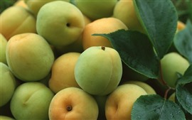 Some green apricots