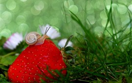 Preview wallpaper Strawberry and snail